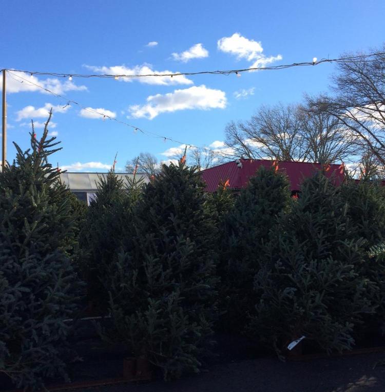 Lambert's tree lot