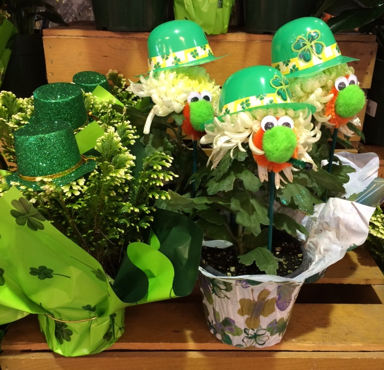 St Patrick's Day Mums