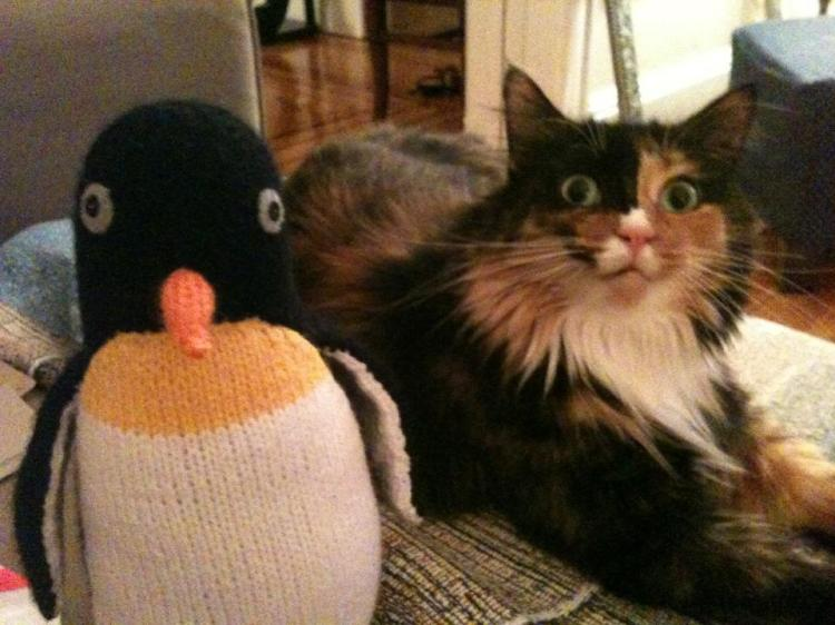 Calico Torti cat & penguin