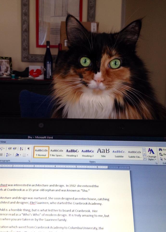Cat laptop Clooney