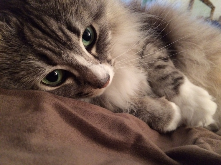 Cat Trixie Lorraine