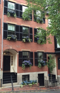 Hydrangea window boxes, Beacon Hill