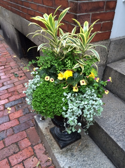 Flowers, Beacon Hill