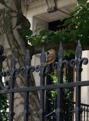 Back Bay, Bird on Wrought Iron Fence