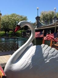 9 Swan Close-up
