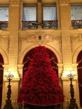 Poinsettia tree in the Great Hall